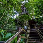 Image for the Tweet beginning: The 11 best forest canopy