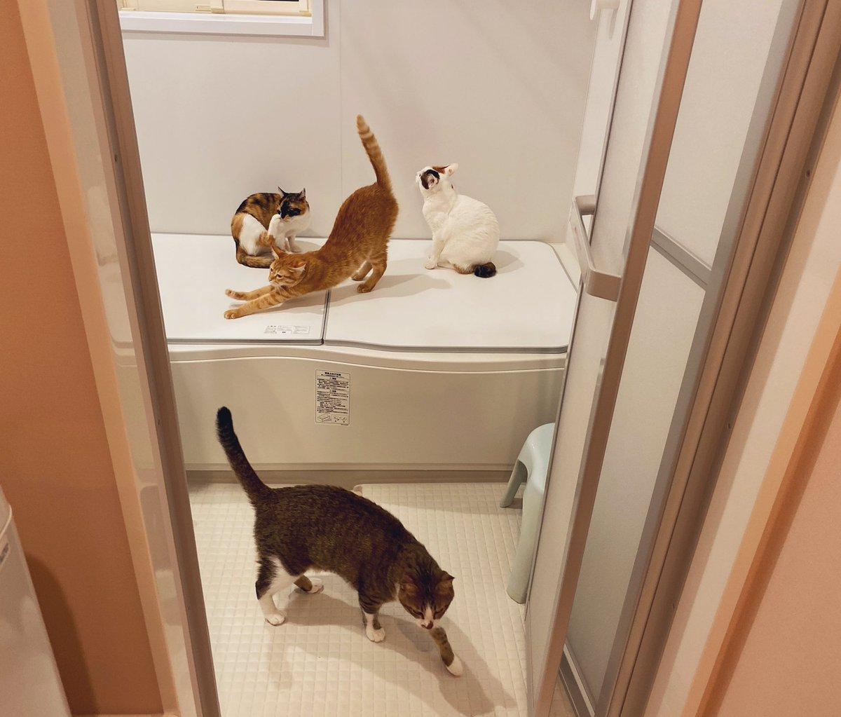 浴室暖房つけた瞬間コレ。我が家名物、猫風呂へようこそ