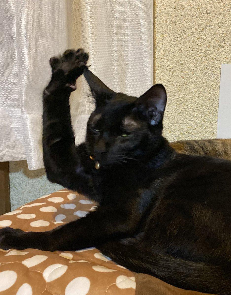ちょっといいですか?と挙手す猫