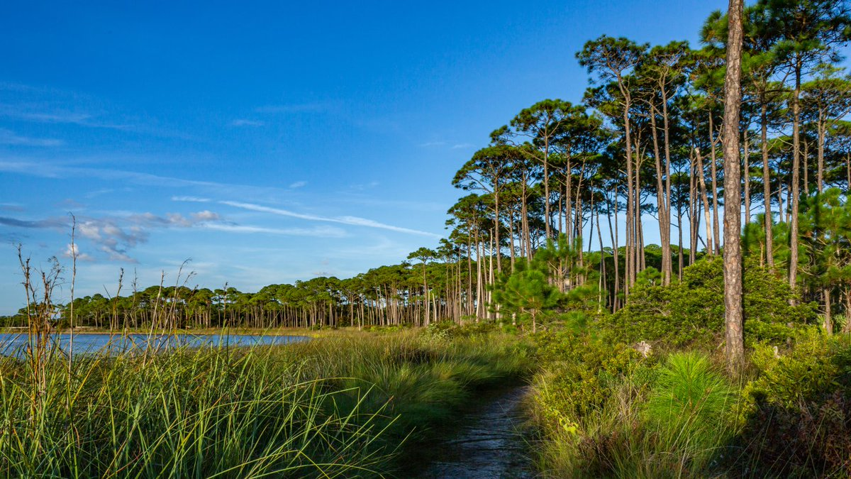 There's 200 miles of #trails throughout #SouthWalton! How do you plan to get out and explore?  🍃👣 #NationalTakeAHikeDay