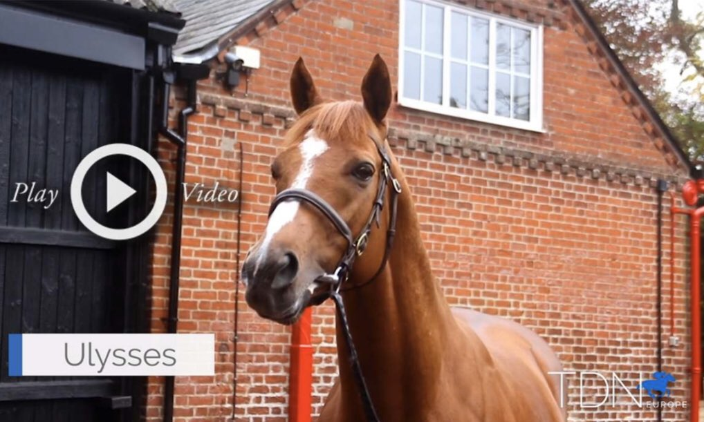 Really enjoyed producing this video on Ulysses. Thank you to Chris Richardson and all @CPStudOfficial for their time. A handsome horse with some nice foals to look forward to: https://t.co/gzOcaegN8U