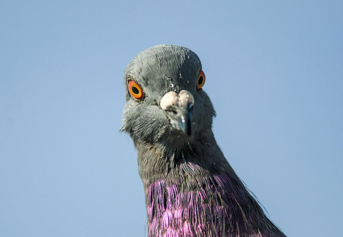 Me: 'I'm telling you, I'm not crazy' The street pigeon I'm talking to: