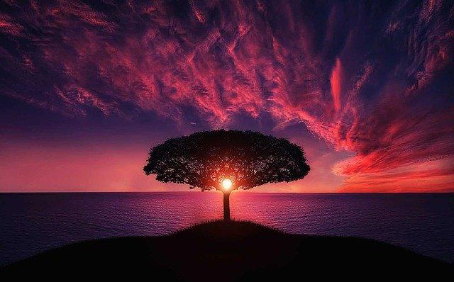 #Ocean photo by Bessi @Pixabay#tree #sunset #amazing #photo #photography #beautiful #travelphotography #travelphoto #pic