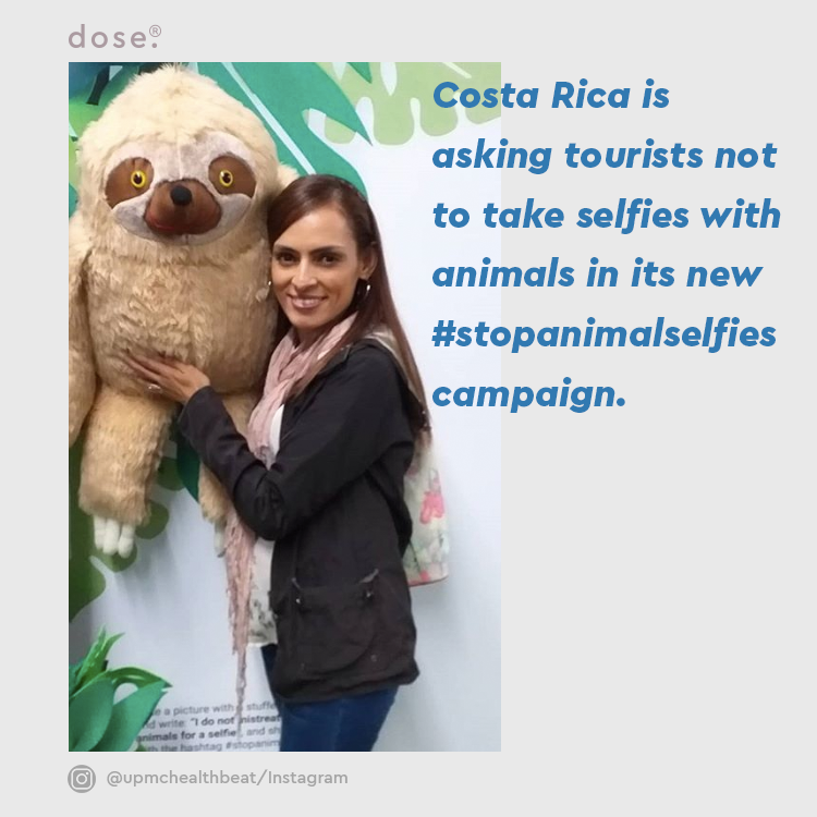 The Costa Rican Tourism Institute's campaign is a response to the increasing number of tourists who are coming to the country to get Instagram-worthy content with animals.