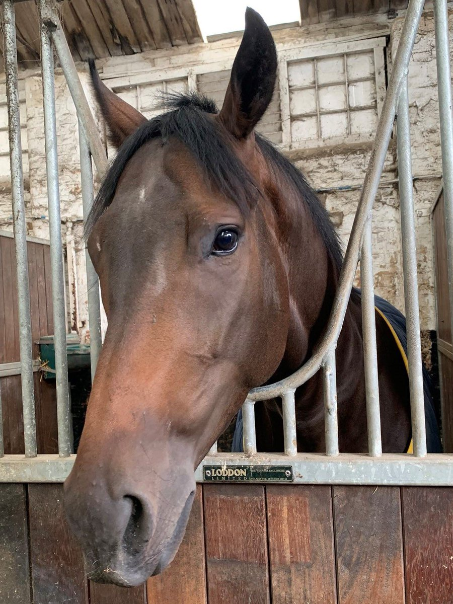 Our second runner today @Southwell_Races is the @RichardFahey trained Bobby Shaft  After his 2nd place @NewcastleRaces on his comeback at the beginning of the month, we're hoping for another strong run!   @bazmchugh takes the ride  Good luck to them & all connections! 🤞🏼🐎