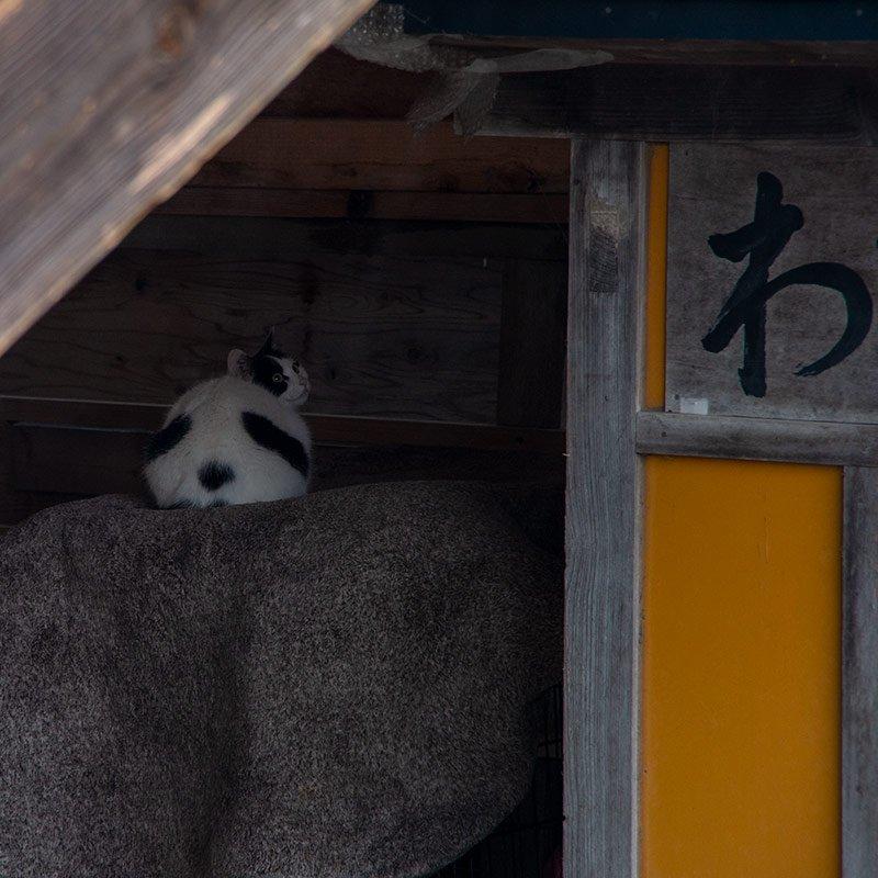 #わさお 番外編:わさお小屋になんでパンダの頭部があるのかな?とおもったらねこだった #wasao