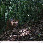 Image for the Tweet beginning: Two more camera trap photos