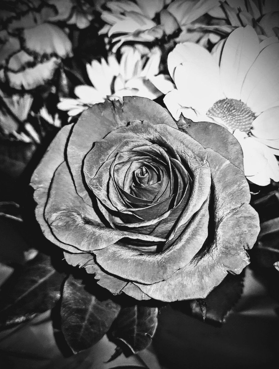 Casual photography from phone again #photography #ROSE #blackandwhite