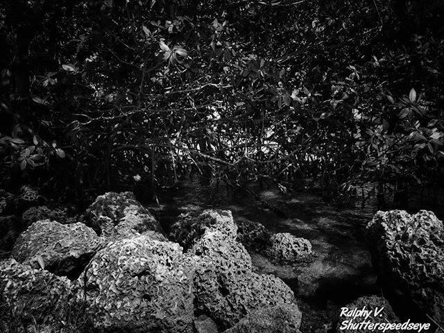 #Miami #Outdoors #Nature #BlackandWhite #BlackandWhitePhotography #RalphyV #RalphyVPhotography #ShutterSpeedsEye #PhotographyLife #LifeBehindTheLens  #IgersMiami #StreetPhotography #Street #Igers #Igers_fl #IgersMiami #ShootMiami #PhotographyisArt #photography …