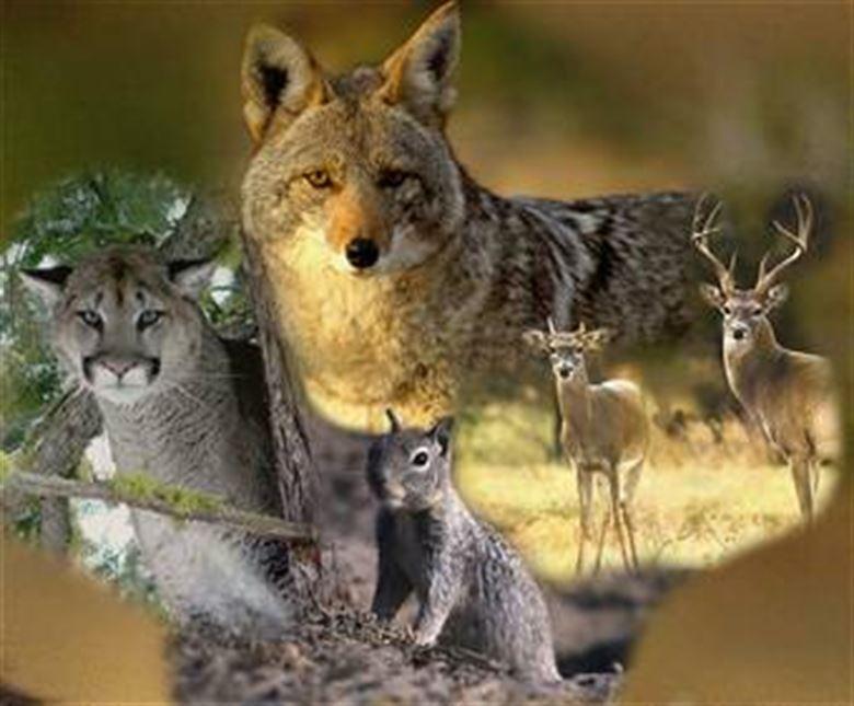 Tierschutz ist Erziehung zur Menschlichkeit. Albert Schweitzer