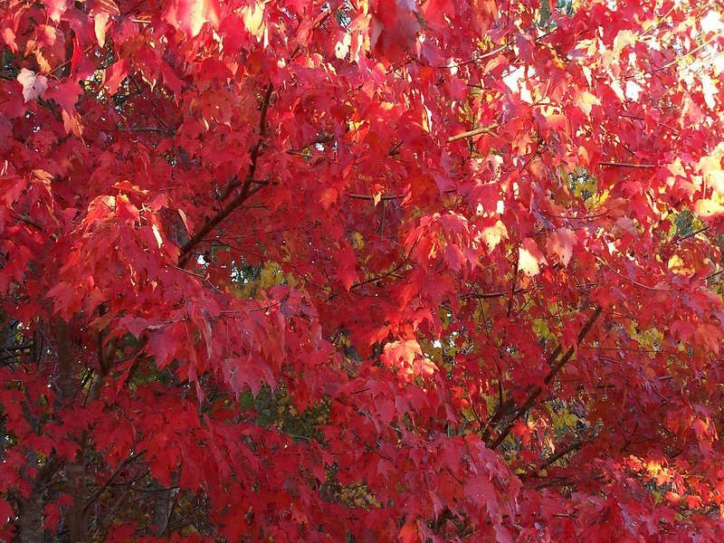 https://www. michellescrazybusylife.net/index.php/2019 /11/18/fall-is-nearly-ending/  …  Fall is making its closing, and winter is fast approaching.... #fallleaves #fall #winter #blog #blogger #wordpress #autumn #autumnleaves<br>http://pic.twitter.com/cAFM1IEtNb