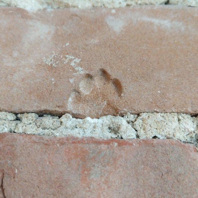 Cat Plants Paw Print on Brick