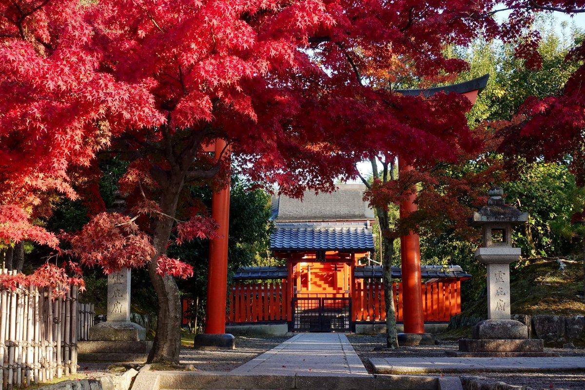 「京の紅葉 嵐山渡月橋・天龍寺・二尊院・祇王寺・嵯峨釈迦堂・化野念仏寺・愛宕念仏寺・大覚寺・二尊院」11月18日のまとめ。嵐山・嵯峨野は例年より早く見頃を迎えているところからやや遅めのところまで様々で長く楽しめそうです。今年は紅葉当たり年です。お見逃しなく!