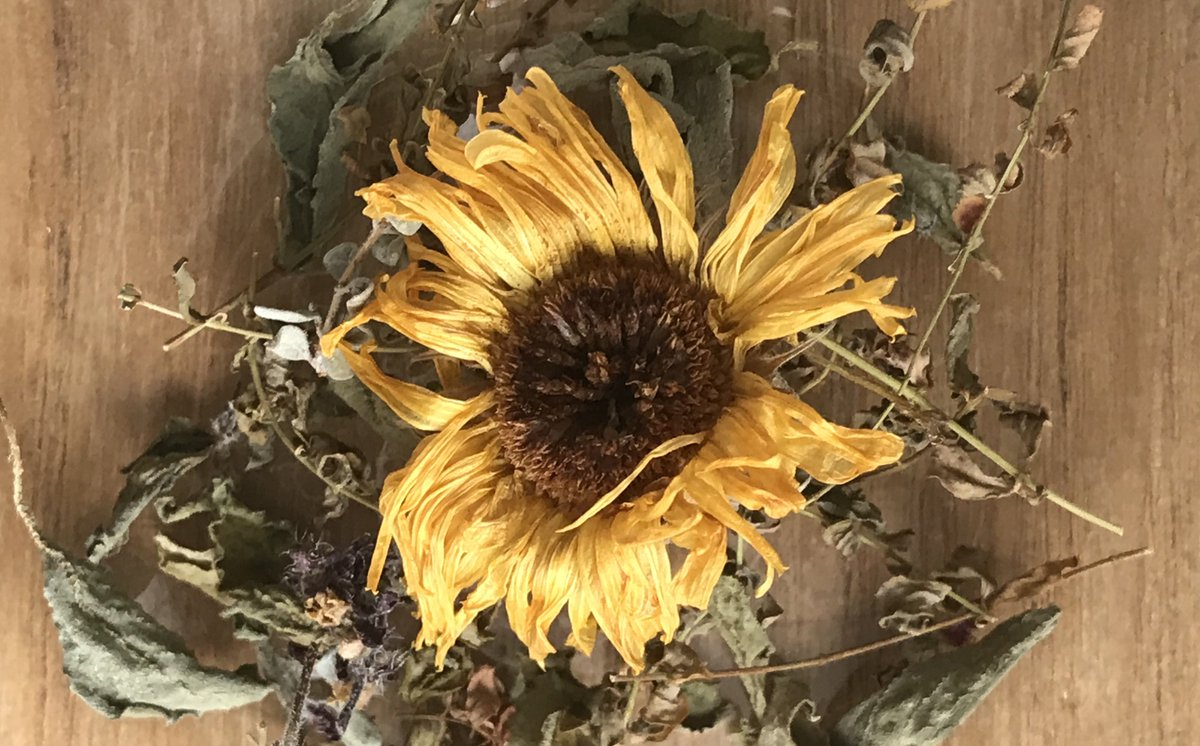 【11月19日の月詠み】月は獅子座。守護星が太陽の獅子座の月の日はキク科の植物が力を与えてくれます。抗菌作用のあるカレンデュラのハーブティーで免疫力をアップして風邪を予防しましょう #11月19日 #おはようございます #占星術 #月星座 #獅子座 #暦生活 #七十二候 #金盞香 #月詠みレンカ #中野区