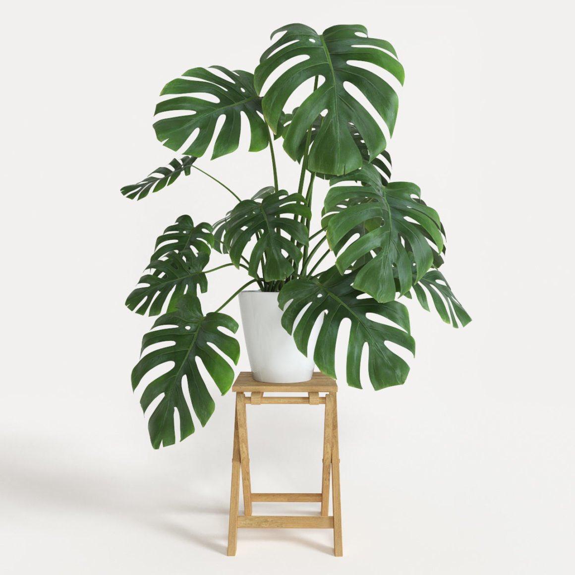 "nuttbpsen on Twitter: ""สำหรับคนที่อยากปลูกต้นไม้ในบ้านหรือห้องนอน ..."