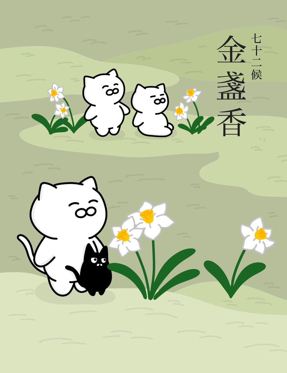 【金盞香】 (きんせんかさく)  水仙の花が香り高く咲くころ。この「金盞」とはキク科の春の花であるキンセンカではなく、「金盞銀台」の異名を持つ水仙のこと。七十二候のひとつで二十四節気の立冬の末候にあたる。11月18日~11月21日ごろ。#七十二候