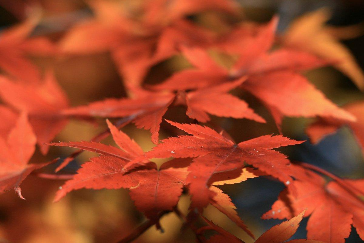 ちょっとだけ秋を探してみました!