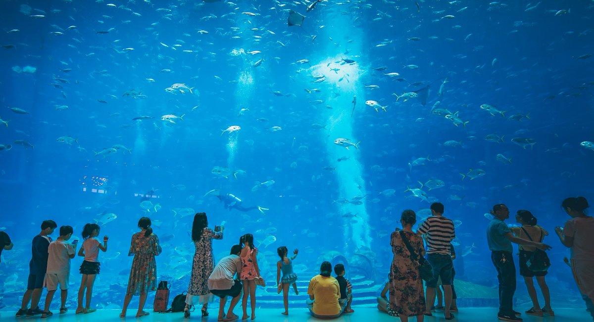 The Lost Chambers Aquarium Atlantis Hotel Dubai | Best Aquariums in Dubai