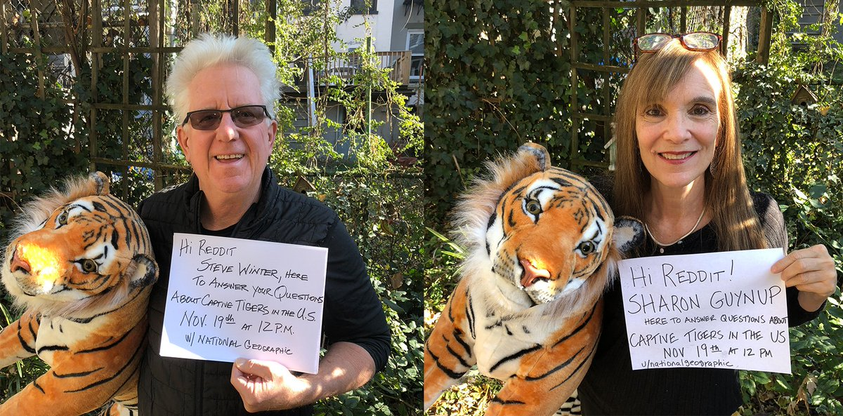 Today at 12pm, photographer Steve Winter ( @swfoto) and journalist Sharon Guynup ( @sguynup) will be doing a  @Reddit AMA on captive tigers living the US  https://www.reddit.com/r/IAmA/comments/dympfb/we_are_nat_geo_photographer_steve_winter_and/