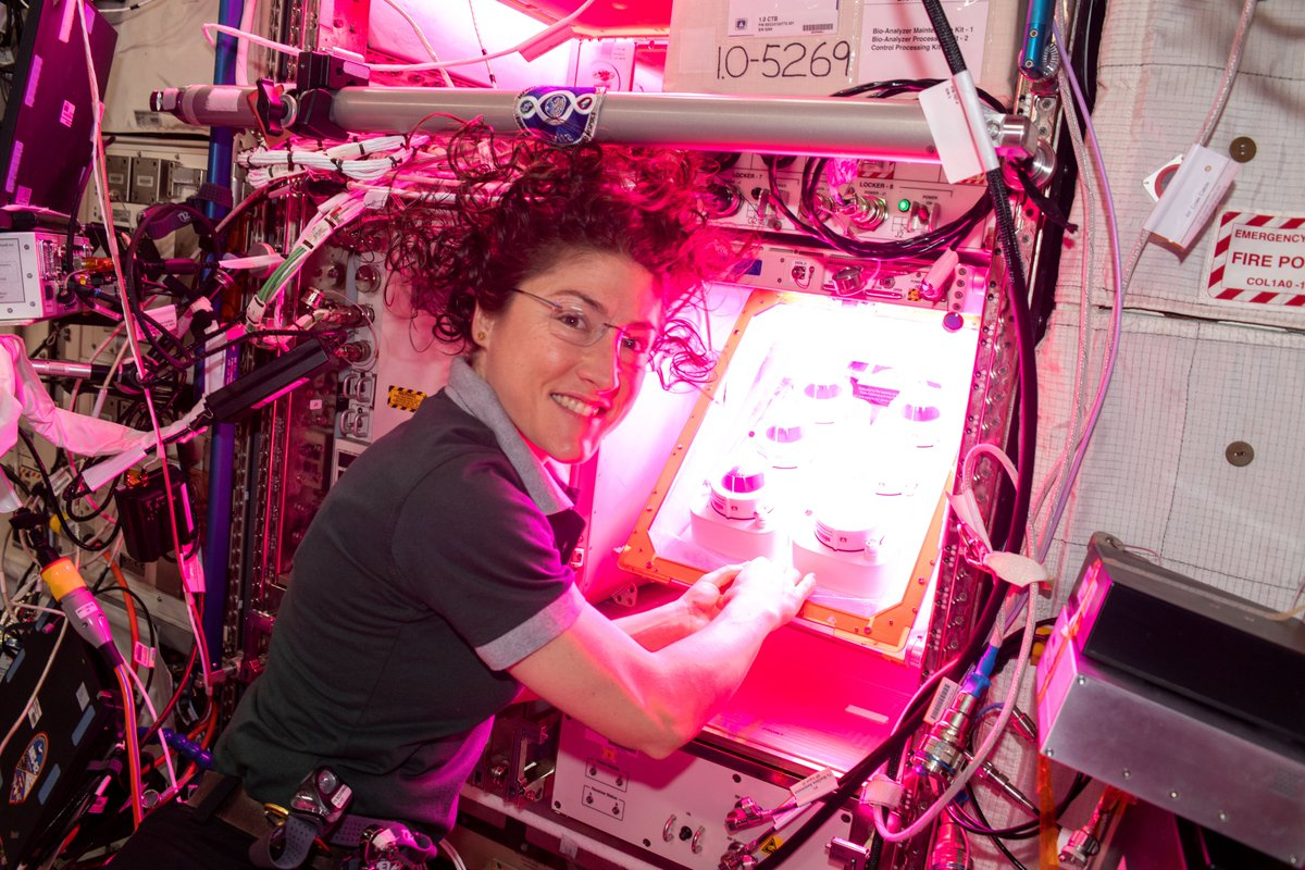 "Space gardens! 🌱 NASA's Human Research Program studies how crops grown in space may provide behavioral health benefits to the astronauts. ""Veggie"" aims to supply safe, nutritious food and improved mood for astronauts on deep space missions. https://www.nasa.gov/feature/space-life-and-physical-sciences-research-and-applications-spacex-16-experimentspayloads …"
