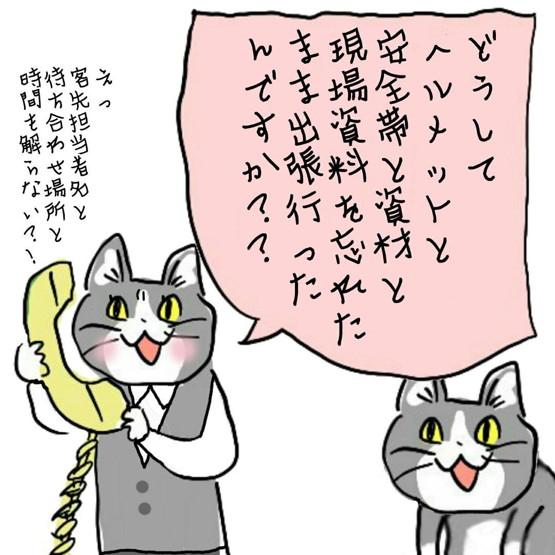 猫 ヨシ 現場