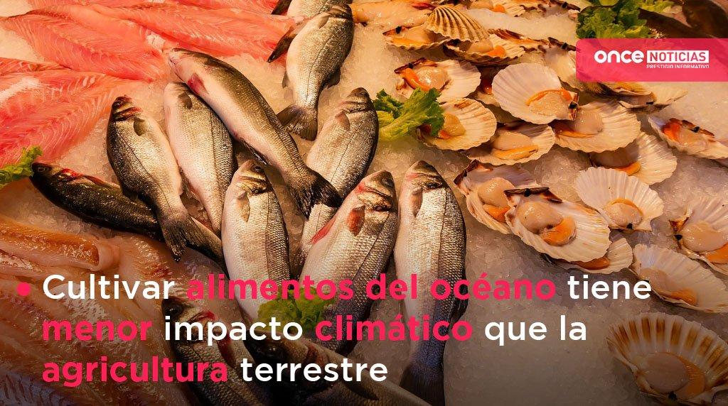 #Entérate El océano podría proporcionar unas seis veces más alimentos de lo que lo hace ahora, con una mejor gestión y más innovación tecnológica.🎣🦐🍤#OnceNoticias http://bit.ly/330Kxo2