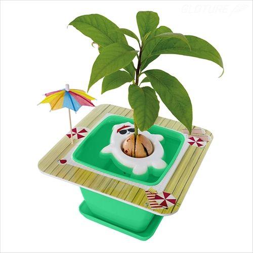 手軽にアボカドを育てられる栽培キットが登場 キャラクターのお腹で種をプカプカ支えるスタイル