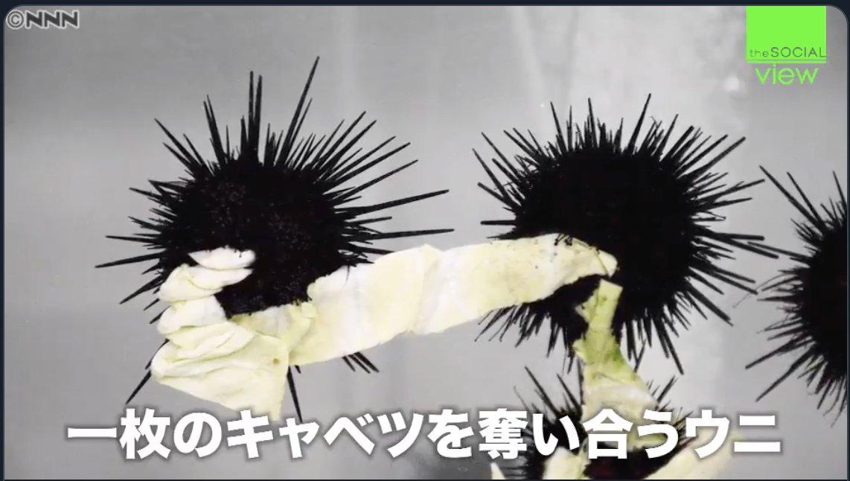 HolyGrail / 蜘蛛糸まな🕸️C97火曜日南リ17aさんの投稿画像