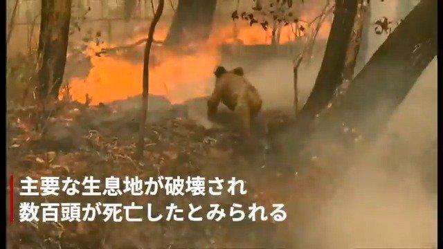 BBCニュース- 豪山火事、通行人がコアラを救出 生息地に火の手広がり数百頭死亡か