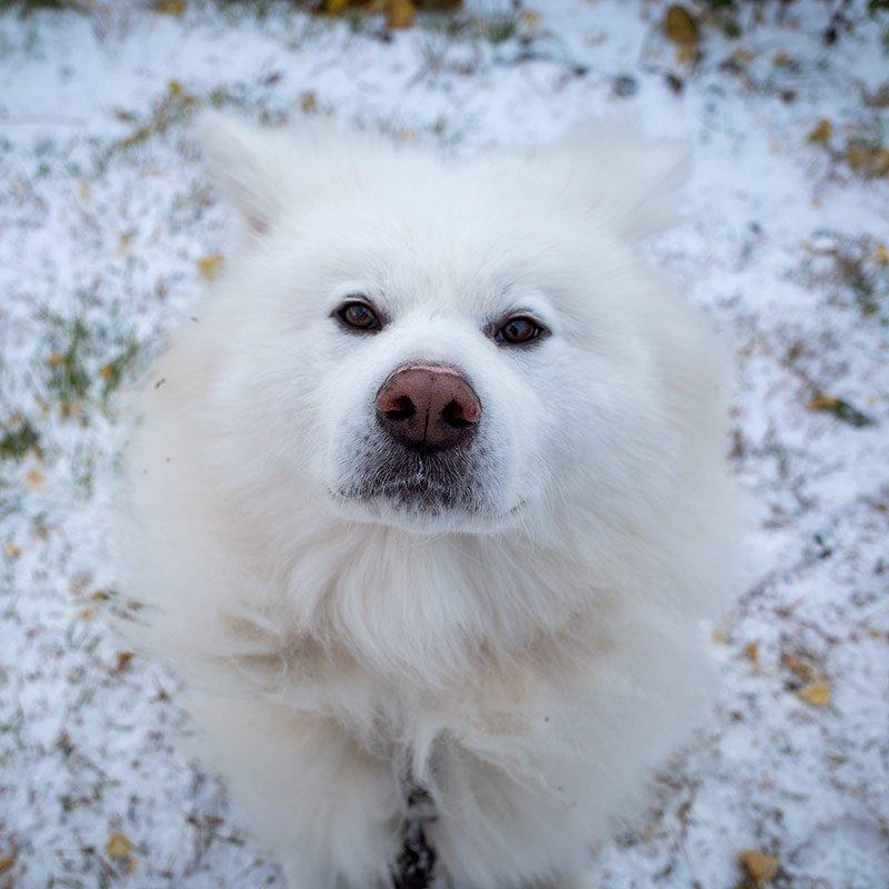 初雪だ! ( #ちょめ です) #chome