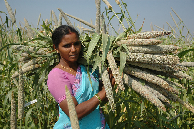 Less rice, more nutritious crops will enhance Indias food supply - Top Tweets Photo