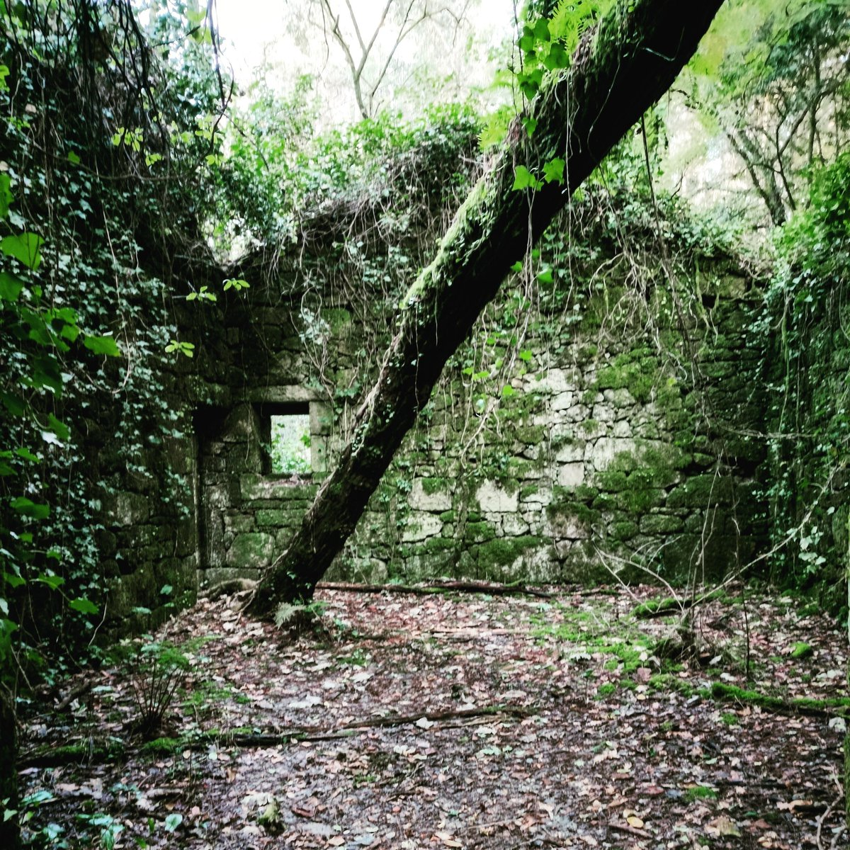 サリナス (Vilaboa )   #風景 #森  #サリナス #Salinas #pontevedra #vilaboa #川 #廃 #salinasdevilaboa #galicia #自然 #スペイン