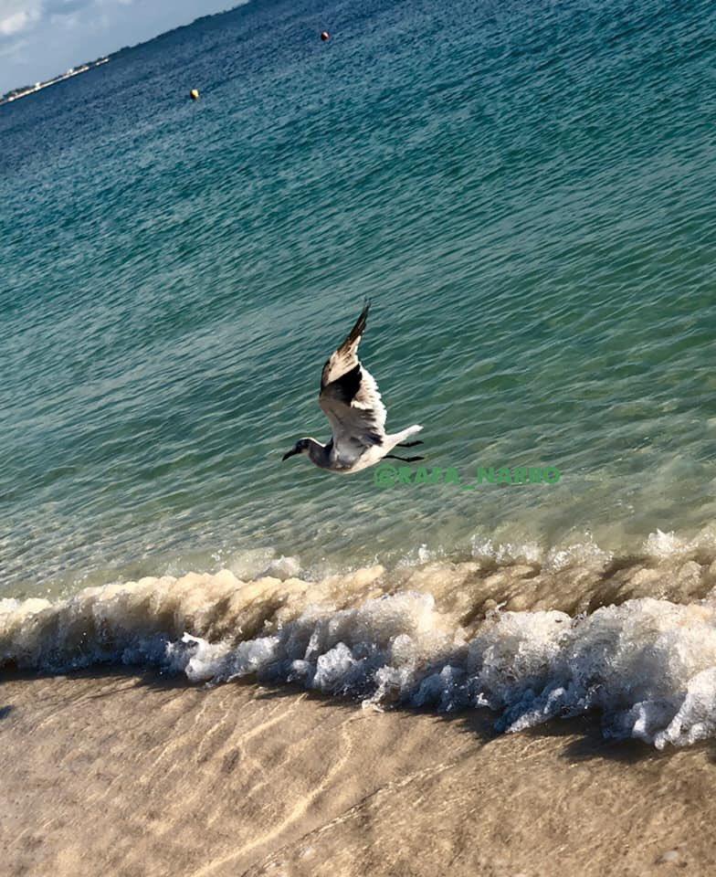 Rafa Balcázar Narro on Twitter: #FelizLunes Aprovechando los bellos momentos... los regalos que nos da la vida... las pinceladas que nos obsequia el gran arquitecto del universo.   #Rafa #Balcázar #Narro #Tlalnepantla #EdoMéx #sol #arena y #mar #Cancún #Travel #VisitMexico #foto #pic #Photo #fotógrafo…