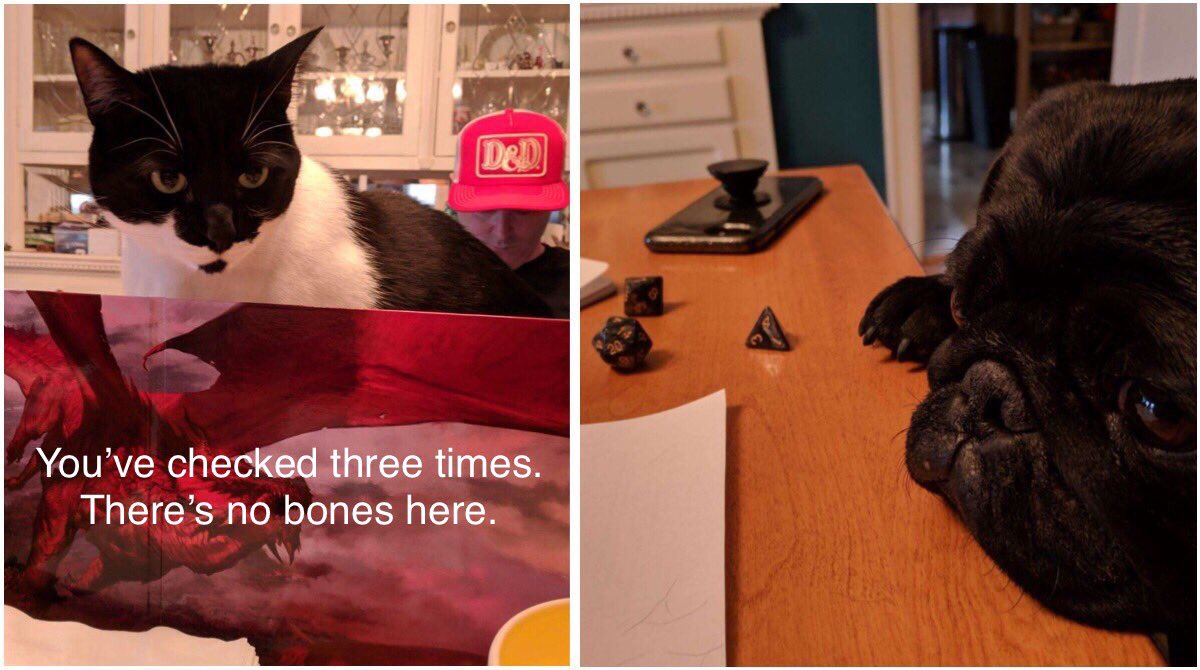 Replying to @HellcowKeith: Sure, dogs can PLAY D&D... but it takes a cat to DM. #DnD @JeremyECrawford