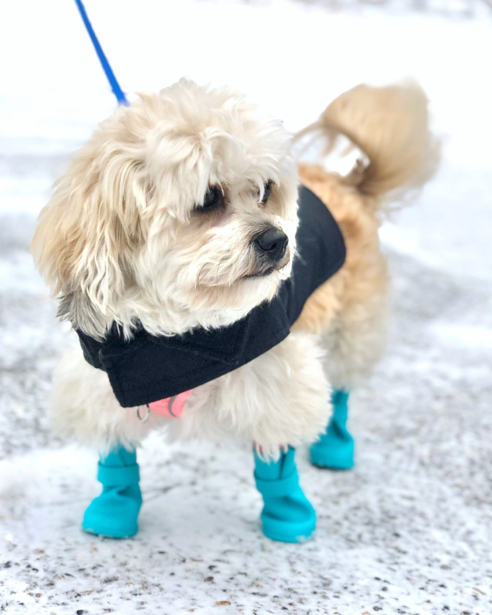 Replying to @PressHerald: The little booties we can't.