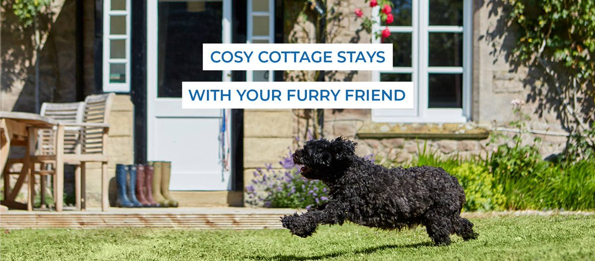 Here at White Heron Properties we have 3 dog friendly cottages, so there is no need to leave your best friend at home! #dogfriendly #holiday #holidaycottage #localpub #mansbestfriend #herefordshire #countrywalks #countrycottage #herefordhour #traveltuesdaypic.twitter.com/tiJ2Br92Dh