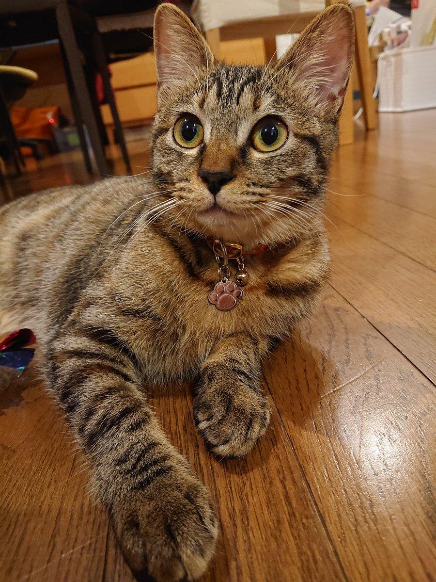 今日も1日お疲れにゃ~🍀おやすみ握手にゃ…🐾明日はもっと良い日が来ますようににゃ~✨忘年会・お食事会、美味しく温かいおもてなしのお店にゃ✨🐈さくら広報ねこ部長◎席予約は☎も■宴会予約→◆目黒インドネパール料理ラクシュミー  #忘年会 #猫好きさんと繋がりたい