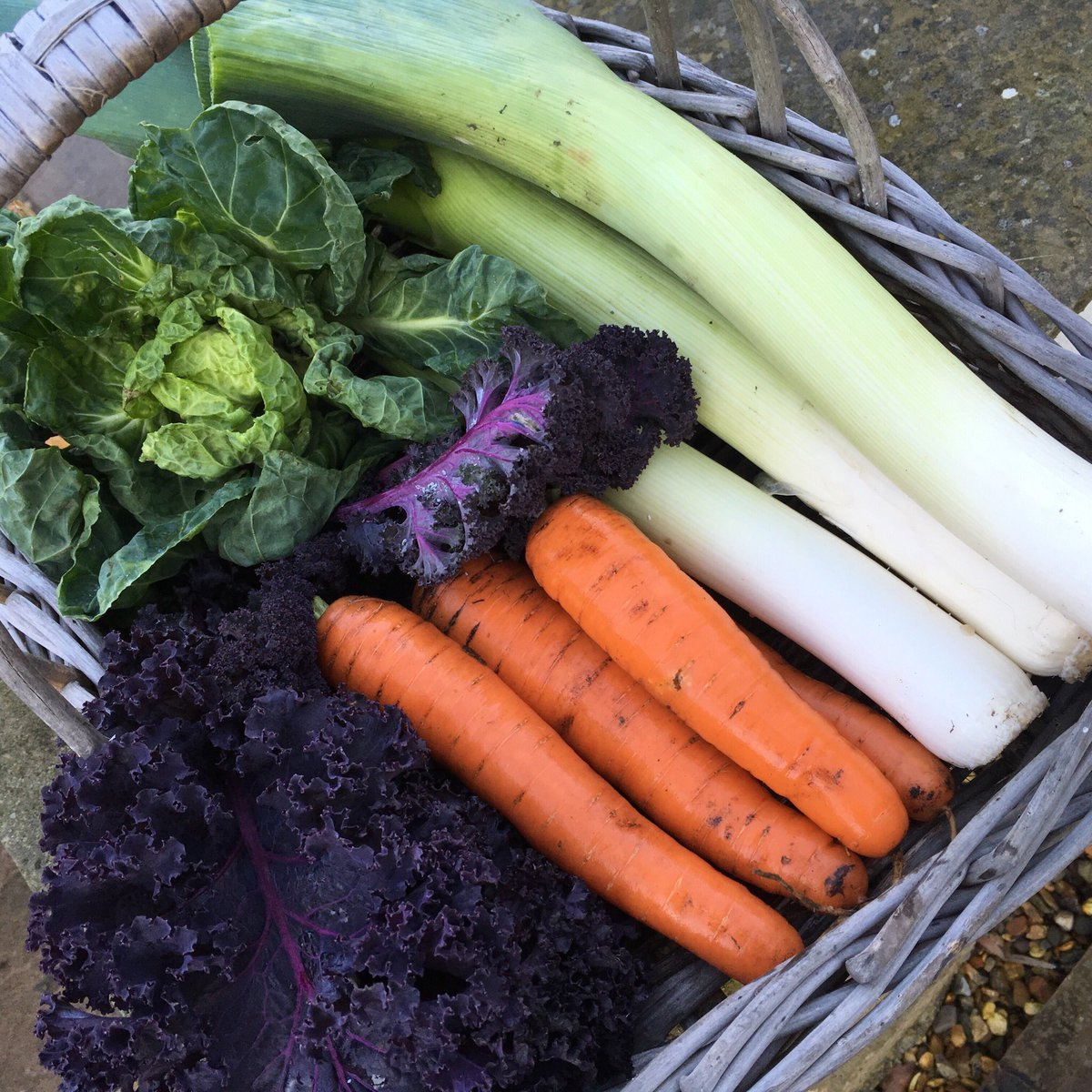 #vegetables fresh from the garden for this evening's meal. Leeks, kale, carrots & Brussels tops!  #Homegrown<br>http://pic.twitter.com/UNv6EpRE4J