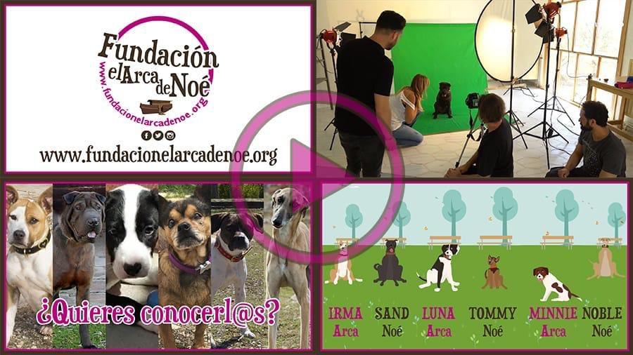 Foto cedida por Fundación Arca de Noé
