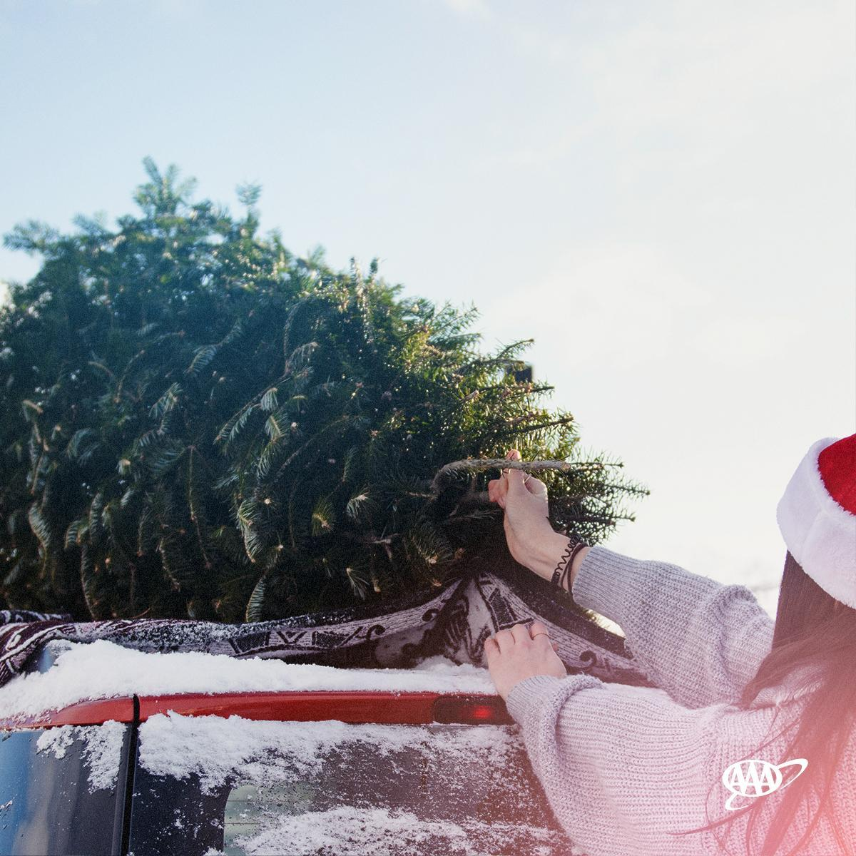 AAA research found that road debris caused more than 200,000 crashes in a 4-year period. Real Christmas trees can be dangerous projectiles if not properly secured. AAA offers these easy to follow steps  #christmastree #christmas2019 #AAA