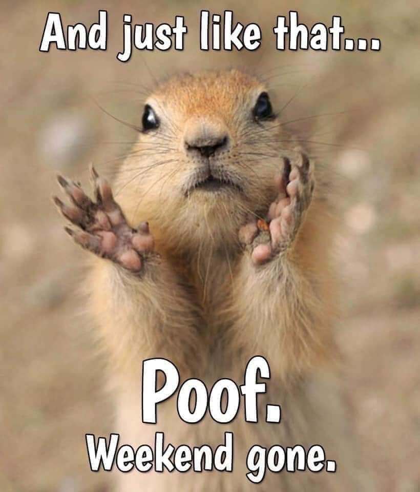 And just like that... Poof  Weekend gone  #TuesdayThoughts <br>http://pic.twitter.com/9TQ6KxyDqN
