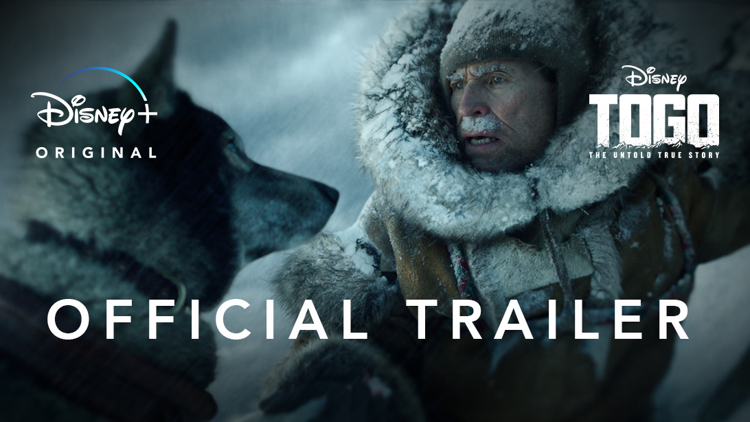 This is Togo, the mischievous pup turned sled dog legend. His heroic journey across Alaska will never again be forgotten. He's 14/10 and his story will finally be told December 20th on @DisneyPlus #DisneyPartner