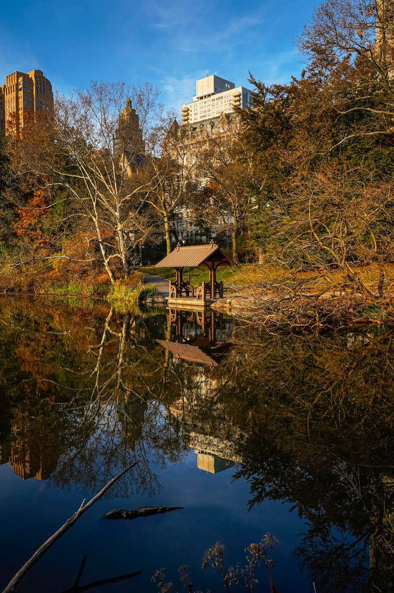 #splendid_reflections #nylovesfall #fallinny #autumnvibes🍁#ig_color #colorofnyc #loves_united_wildnature #nbc4ny #loves_nyc #abc7ny #wow_natura #nyclive #ny1pic #explorenyc #centralpark #wildnewyork #loves_nyc #amazing_captures #made_in_ny #tlpicks #picturesofnewyork