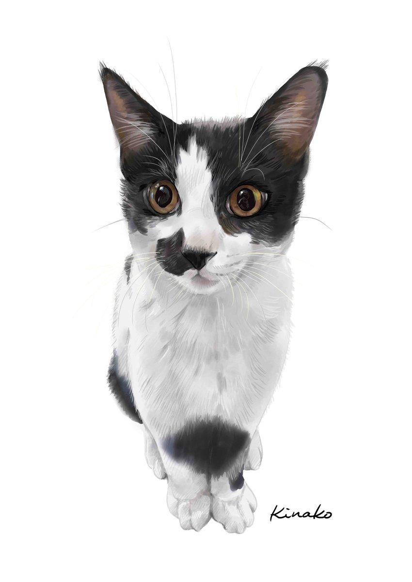 友人の里親会で保護した子猫です。イラストで描いてみました。外で生まれ、母親ネコを捕獲して、こねこたちを保護したそうです(母猫は、TNRしたそうです。)美しくて純粋な瞳です。幸せになりますように……💕#猫絵 #cat #drawing #猫イラスト #猫画  #野良猫