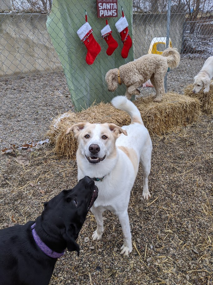 Murphy loves hanging out with his friends at BarkTown USA!