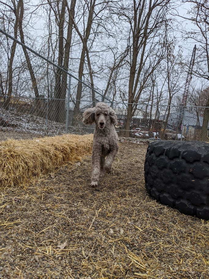 Teddy loves to run around and play at BarkTown USA!