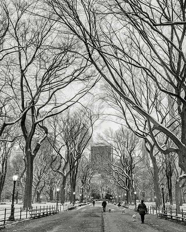 There's still some snow on the north side of the elm trees lining The Mall in #centralpark......#manhattan #newyorkcity #nycity #nyc #newyork #ny #rsa_streetview #nycprimeshot #loves_nyc #ig_newyork #ig_nycity #icapture_nyc #made_in_ny #what_I_saw_… https://ift.tt/383yJF7