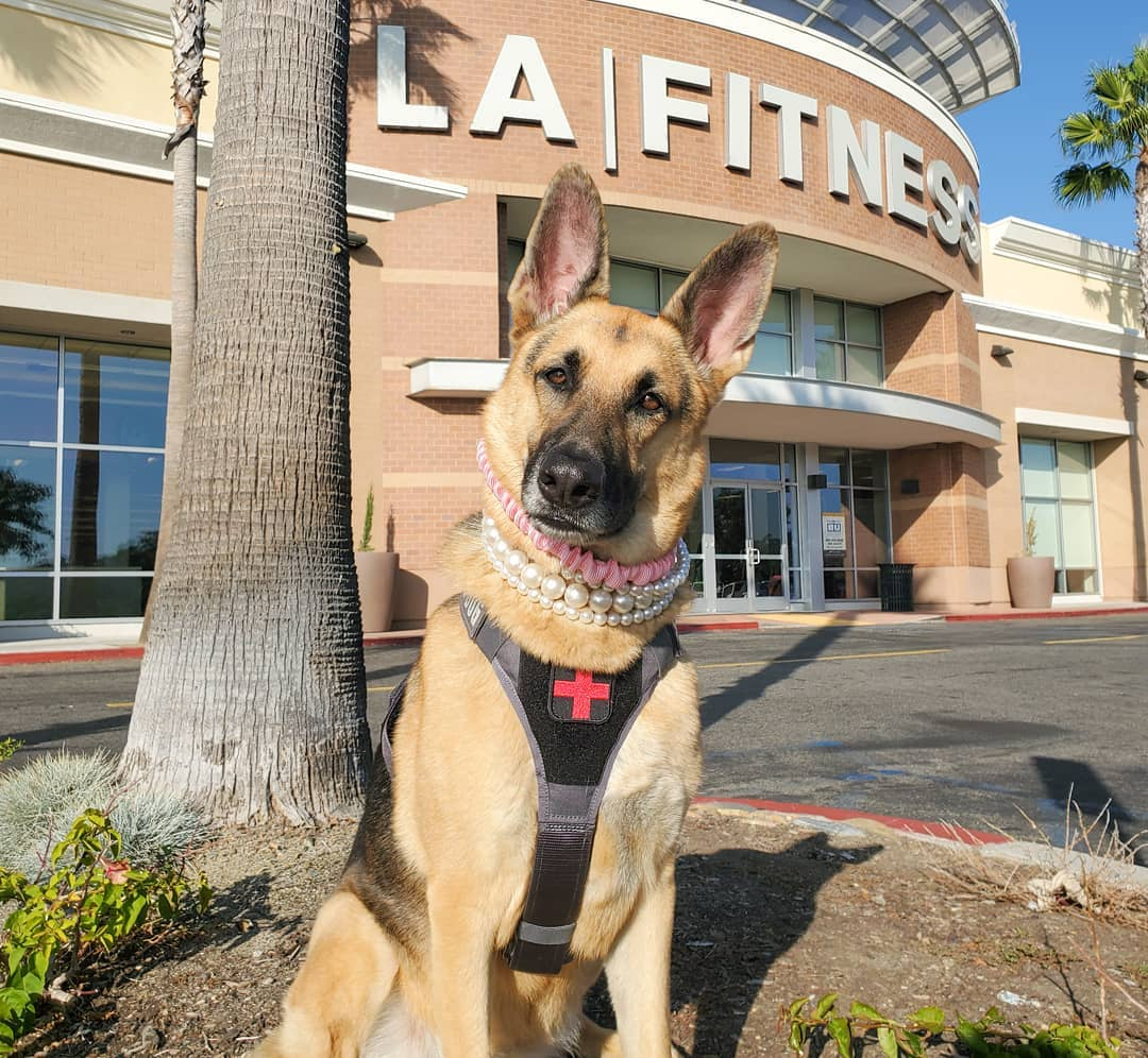 Do you or someone you know have a service animal? Then LA Fitness welcomes you!  Our service animal practices are at the front entrance of our gyms. Come on down to any location with your service animal and you're all set. No further information or documentation is required.