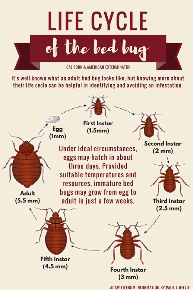 Bedbug Hashtag On Twitter