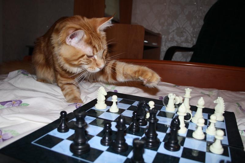 картинки шахматные смешные